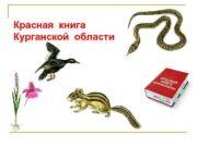 Красная книга Курганской области Степной сурок или
