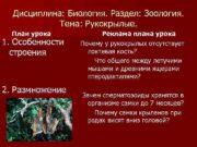 Дисциплина Биология Раздел Зоология Тема Рукокрылые План урока