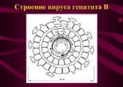 Строение вируса гепатита В Пути передачи HВV-инфекции