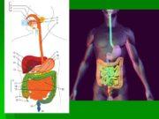 БОЛЕВОЙ СИМПТОМ в эпигастральной области заболевания диафрагмы