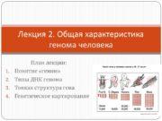 План лекции: Понятие «геном» Типы ДНК генома Тонкая