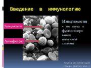 Введение в иммунологию Эритроциты Лимфоцит Иммунология — это