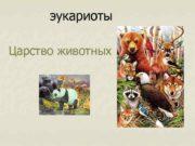 эукариоты Царство животных Основные черты сходства и