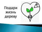 Подари жизнь дереву Береза повислая Символ России