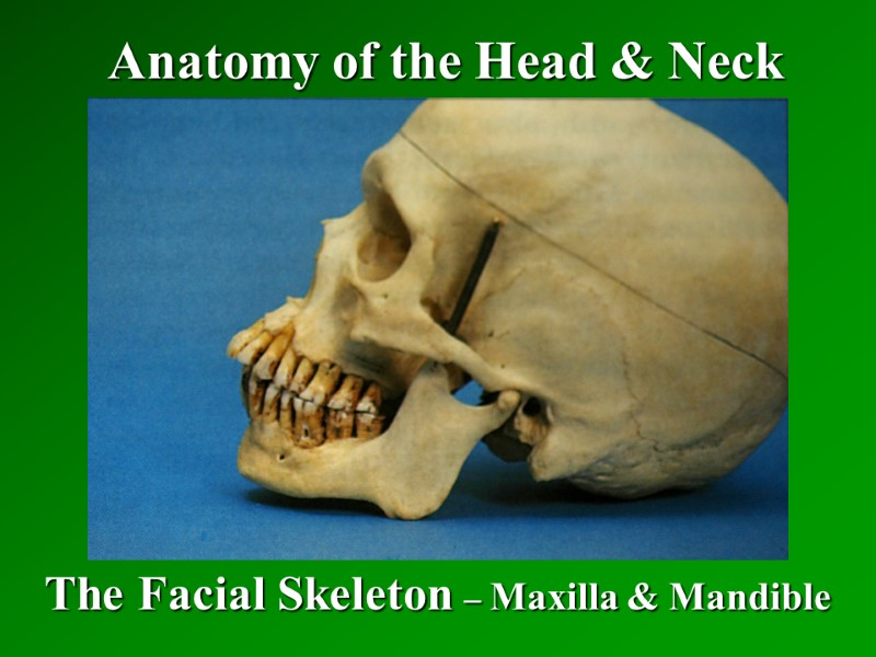 Anatomy Of The Head Neck The Facial