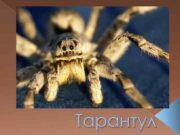 Тарантул Біологічна класифікація Царство Тварини Тип Членистоногі
