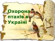 Охорона птахів в Україні   • В