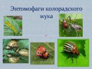 Энтомофаги колорадского жука Энтомофаг Паразит Вредитель Отряд