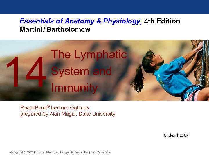 Essentials of Anatomy Physiology 4 th Edition