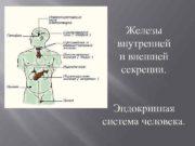 Железы внутренней и внешней секреции Эндокринная система человека