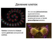 Деление клеток Это основа размножения одноклеточных размножения и