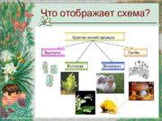 Что отображает схема Царства живой природы Бактерии Грибы