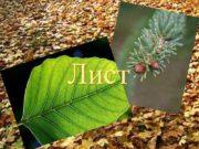 Лист Лист наружный орган растения
