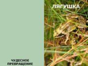 ЛЯГУШКА ЧУДЕСНОЕ ПРЕВРАЩЕНИЕ Весной самка лягушки откладывает