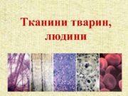 Тканини тварин людини Тканина -група