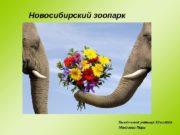 Новосибирский зоопарк Выполнила ученица 10 класса Мехдиева Пери