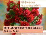 28 февраля Классная работа Многолетние растения флоксы пионы