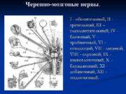Черепно-мозговые нервы I — обонятельный II зрительный III