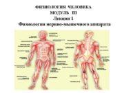 ФИЗИОЛОГИЯ ЧЕЛОВЕКА МОДУЛЬ III Лекция 1 Физиология нервно-мышечного