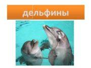 дельфины Дельфины- очень умные животные Живут стаями