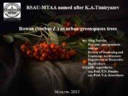 RSAU-MTAA named after K A Timiryazev Rowan Sorbus