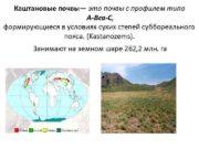 Каштановые почвы это почвы с профилем типа А-Вса-С