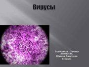 Вирусы Выполнили Зимина Анастасия Шахова Анастасия 11