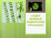 ОТДЕЛ ЗЕЛЕНЫЕ ВОДОРОСЛИ Chlorophyta Общая характеристика Зелёные