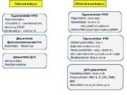 Простые вирусы Оболочечные вирусы Однонитевая РНК Picornaviridae Enterovirus