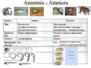 Anamnia и Amniota Амнион аллантоис хорион серозная оболоч
