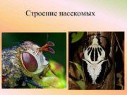 Строение насекомых Внешний вид насекомого Голова