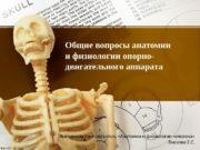 Общие вопросы анатомии и физиологии опорно- двигательного аппарата