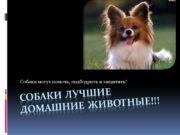 Собаки ЛУЧШИЕ ДОМАШНИЕ ЖИВОТНЫЕ!!! Собаки могут помочь, подбодрить