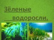 Зёленые водоросли Отдел зеленые водоросли объединяет низшие