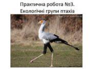Практична робота 3 Екологічні групи птахів Sagittarius