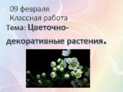 09 февраля Классная работа Тема Цветочно- декоративные растения