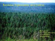 Хвойные бореальные леса тайга Выполнили Ахлюстина Анастасия Злыднев