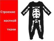 Строение костной ткани Костная ткань