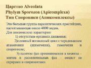 Царство Alveolata Phylym Sporozoa Apicomplexa Тип Споровики Апикомплексы