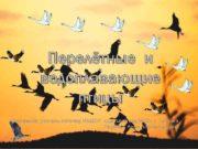 Перелётные и водоплавающие птицы Составила учитель-логопед МБДОУ Детский