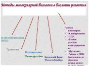 Методы молекулярной биологии в биологии развития Генная инженерия