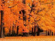 Осенью деревья дарят ёлочке подарки Осина дарит красные