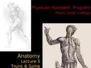 Anatomy Lecture 5 Trunk & Spine Physician Assistant