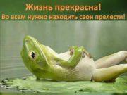 Жизнь прекрасна Во всем нужно находить свои прелести