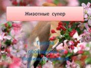 Животные супер Группа сообщение от Полины Канаевой