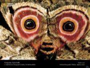 Тело насекомых состоит из головы груди брюшка и