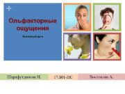 Ольфакторные ощущения Хеморецепция Шарафутдинова Н 17 Б