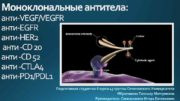 Моноклональные антитела анти-VEGF VEGFR анти-HER 2 анти -CD 20