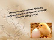 Механическая кулинарная обработка сельскохозяйственной птицы, дичи, кролика и