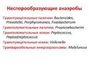Неспорообразующие анаэробы Грамотрицательные палочки Bacteroides Prevotella Porphyromonas Fusobacterium